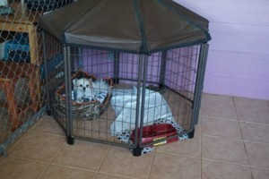 Photo #3: Pet Sitter ~ Your Dog Will Be Part of Our Family!