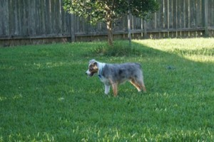 Photo #2: Pet Sitter ~ Your Dog Will Be Part of Our Family!