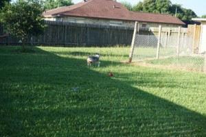 Photo #1: Pet Sitter ~ Your Dog Will Be Part of Our Family!
