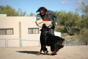 Photo #1: Sublime Canine.... Professional Dog Training & Behavior Modification