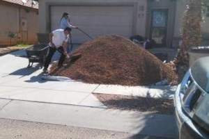 Photo #7: Need some help cleaning your yard?