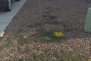 Photo #4: Landscaping and Yard Services. I offer great work for a great price!