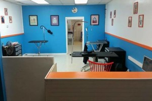 Photo #5: 10% off Professional Pet Grooming. Shedding Clean
