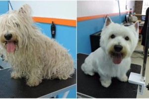 Photo #4: 10% off Professional Pet Grooming. Shedding Clean