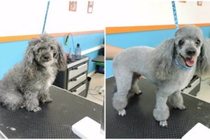 Photo #3: 10% off Professional Pet Grooming. Shedding Clean