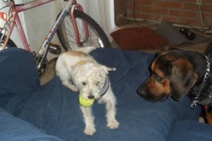 Photo #7: Home boarding for pets