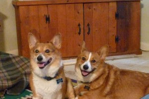 Photo #24: Pet Sitting / Boarding -Short/Long Term. A Special Place For Your Pet!