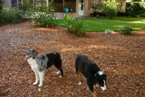Photo #20: Pet Sitting / Boarding -Short/Long Term. A Special Place For Your Pet!