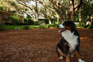 Photo #19: Pet Sitting / Boarding -Short/Long Term. A Special Place For Your Pet!
