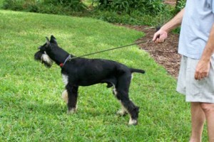 Photo #16: Pet Sitting / Boarding -Short/Long Term. A Special Place For Your Pet!