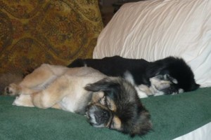Photo #13: Pet Sitting / Boarding -Short/Long Term. A Special Place For Your Pet!