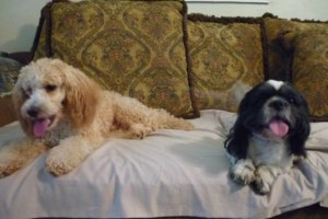 Photo #12: Pet Sitting / Boarding -Short/Long Term. A Special Place For Your Pet!