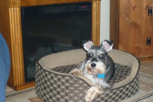 Photo #11: Pet Sitting / Boarding -Short/Long Term. A Special Place For Your Pet!