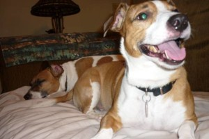 Photo #9: Pet Sitting / Boarding -Short/Long Term. A Special Place For Your Pet!