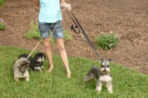 Photo #6: Pet Sitting / Boarding -Short/Long Term. A Special Place For Your Pet!