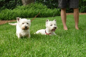 Photo #4: Pet Sitting / Boarding -Short/Long Term. A Special Place For Your Pet!