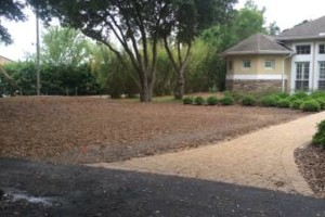 Photo #2: Lawn Care of Central Florida - Professional Lawn Service