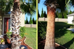 Photo #5: Landscaping & Lawn Care