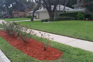 Photo #4: Lawn Maintenance / Landscaping / Tree Trimming and Removal