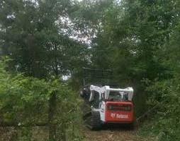 Photo #3: Land Clearing and Mulching Services