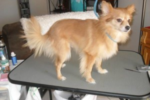 Photo #18: Professional, Affordable Dog Grooming