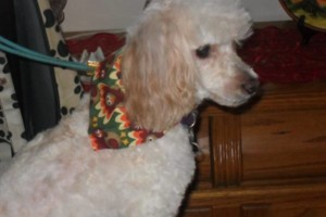Photo #9: Professional, Affordable Dog Grooming