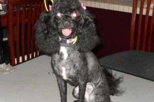 Photo #3: Professional, Affordable Dog Grooming