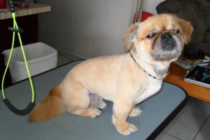 Photo #1: Professional, Affordable Dog Grooming