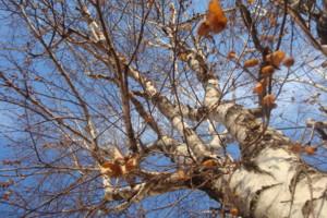 Photo #1: Ibarra Tree Service