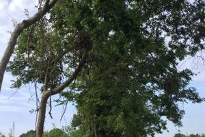 Photo #10: S & B ALL TREES COMPANY (FREE ESTIMATES)
