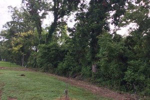 Photo #6: S & B ALL TREES COMPANY (FREE ESTIMATES)
