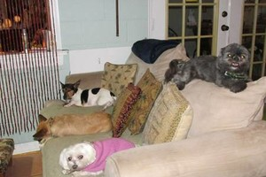 Photo #1: Pet Boarding, Pet Sitting, Doggy Play Dates