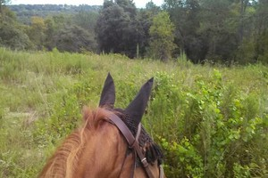 Photo #1: Private horseback riding lessons and trail rides