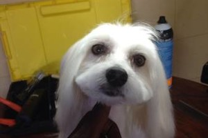 Photo #1: 3 for $99 pet grooming
