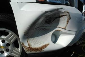 Photo #8: BuMPeR FiNiSH mobile collision repair