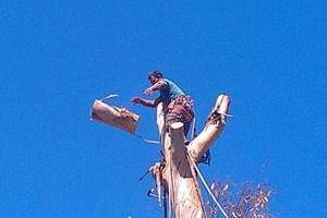 Photo #8: ALEX TREE SERVICE..