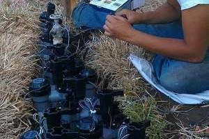 Photo #1: ALEX TREE SERVICE..