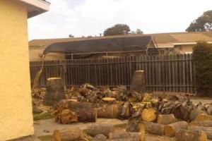 Photo #1: HUGO TREE SERVICES & LANDSCAPE (anywhere)
