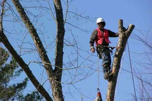 Photo #3: DIMAS TREE SERVICE