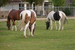 Photo #1: Horse Boarding for retired horses