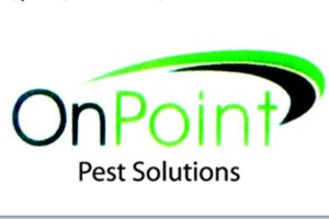 Photo #1: Rats, mice - pest control - insulation ants, spiders, snails, bedbugs..