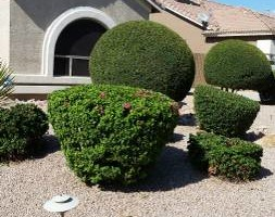 Photo #3: BRANDOS LANDSCAPING AND MAITENANCE