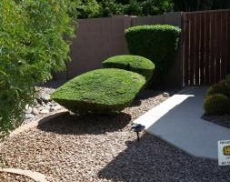 Photo #2: BRANDOS LANDSCAPING AND MAITENANCE