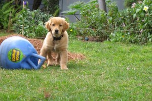 Photo #1: Riley's Dog Boarding