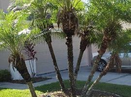 Photo #6: Justin's Tree Service!