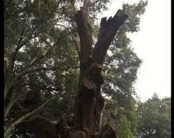 Photo #5: Justin's Tree Service!