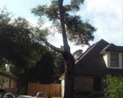Photo #4: Justin's Tree Service!