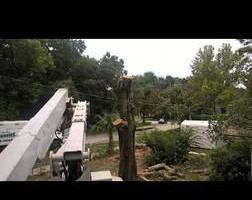 Photo #3: Justin's Tree Service!