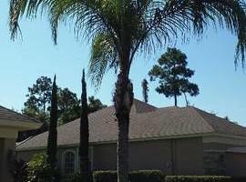 Photo #2: Justin's Tree Service!