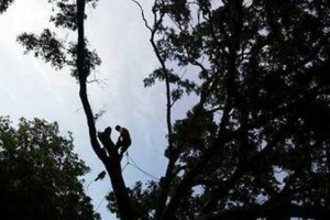 Photo #1: Justin's Tree Service!